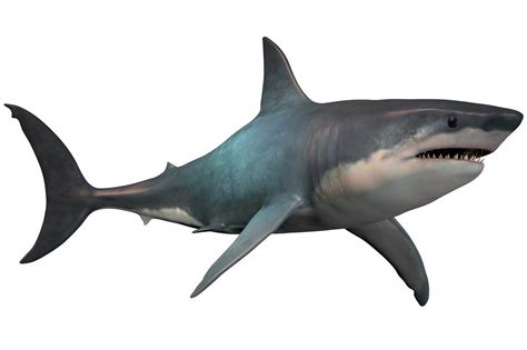 Megalodon Images Facts About The Largest Marine Predator In History The