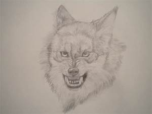 Snarling Wolf by Coyote-Willow on DeviantArt