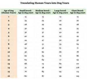 cat years compared to humans the mythology of years
