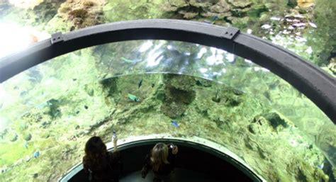 aquarium de g 234 nes