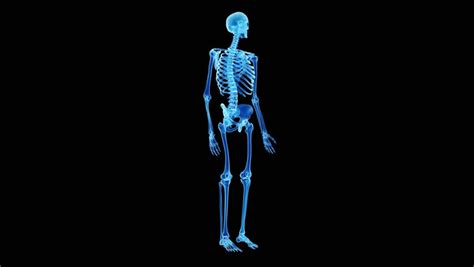 Back Pain Stock Footage Video 44293