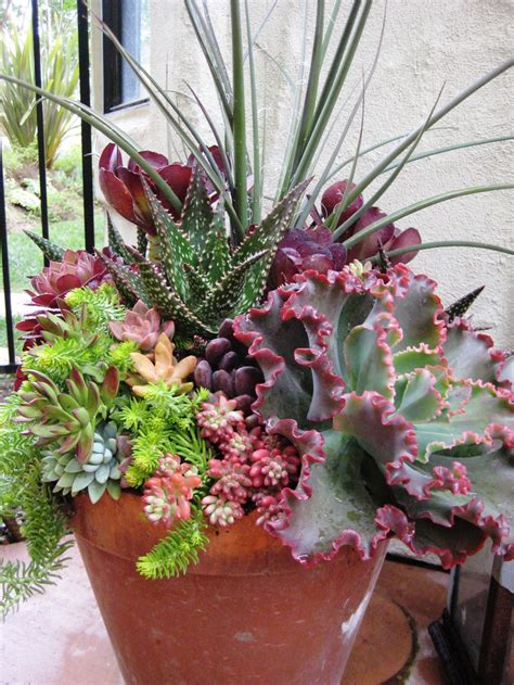 Cactus Container Garden  Wwwimgkidcom  The Image Kid