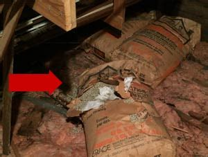 vermiculite attic insulation  asbestos