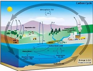 The Carbon Cycle  Sources And Sinks