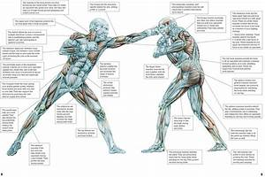 Eight Tips For Preparing Your Muscles For Mma Fighting