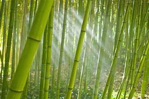 Bamboo Removal - Eradicating Bamboo Without Herbicides