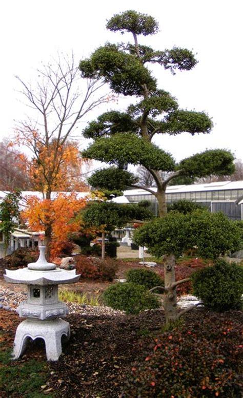 Japanischer Garten  Pflanzen, Säen & Pikieren Selbstde