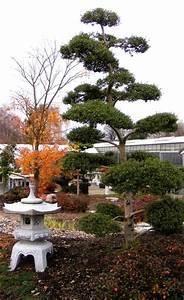 japanischer garten pflanzen saen pikieren selbstde With französischer balkon mit garten bonsai baum
