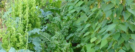 Gartenpflanzen / Kulturpflanzen