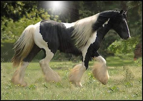 facts   worlds beautiful black horses variety