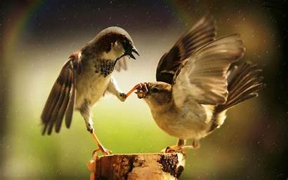 Wallpapers Different Funny Birds Bird Background Kicking
