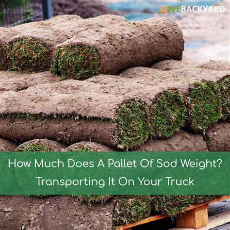 how much does a lawn cost augustine sod how to measure for sod home guides sf gate mid sod tx how much does grass sod
