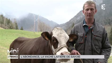 animaux labondance la vache laitiere de savoie youtube