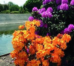 Quand Tailler Les Arbustes De Haies : comment et quand tailler les plantes de son jardin ~ Dode.kayakingforconservation.com Idées de Décoration