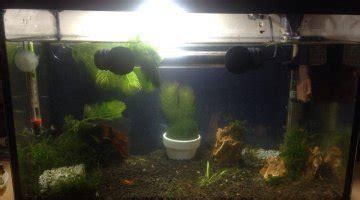 temperature ideale aquarium eau douce aquarium eau douce quelle temperature