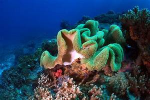 Top 5 diving sites off Constance Lodge Tsarabanjina ...