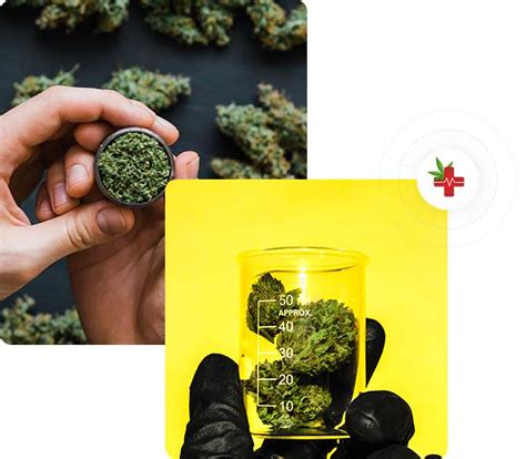 Maybe you would like to learn more about one of these? Get Medical Marijuana Card New York Online | 420 ...