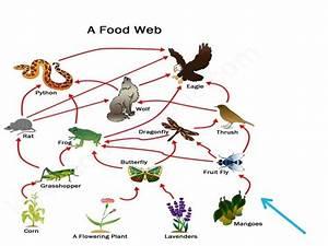 Food Web - Tactivities U2122