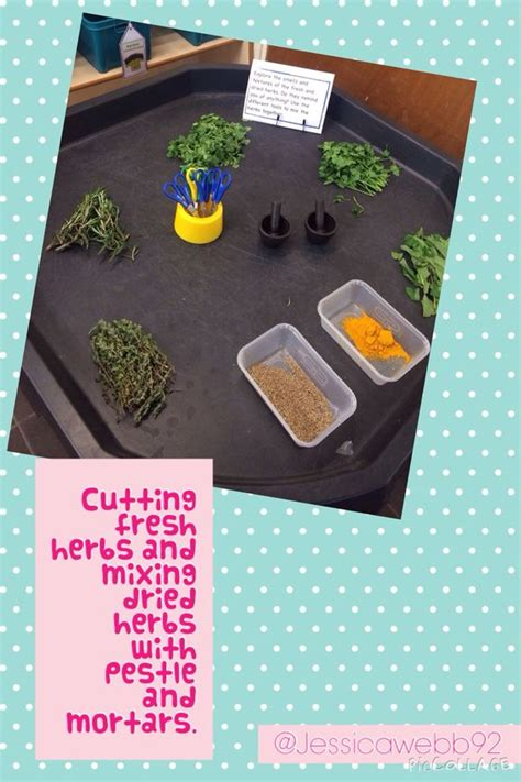 Cutting Fresh Herbs And Mixing Dried Herbs Using Pestle And Mortars  Early Years Sensory Play