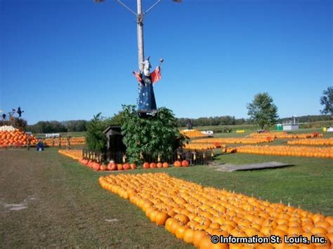 Rombachs Pumpkin Patch by Download Rombach Pumpkin Patch In Chesterfield Missouri
