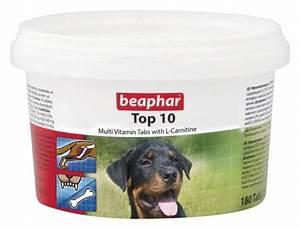 top 10 dog 5