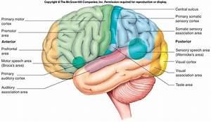 Psych 100 Study Guide  2012-13 Denton