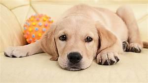 Vermieter Verbietet Hund : bgh kippt verbot von hunden und katzen in mietwohnungen ~ Lizthompson.info Haus und Dekorationen