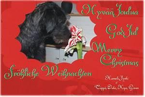 Spanische Weihnachtsgrüße An Freunde : ein whippet namens lucky weihnachtsgr e unserer freunde ~ Haus.voiturepedia.club Haus und Dekorationen