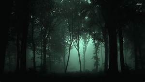 Night, Forest, Wallpapers, -, Top, Free, Night, Forest, Backgrounds