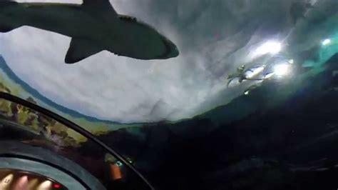 Shark Attack Sea World San Diego Youtube