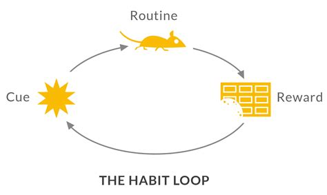 How Habits Are Formed In The Brain by Plan2life