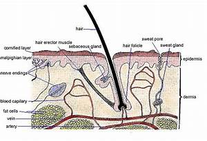 Excretion    Lcbiology