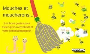 Eliminer Les Moucherons : mouches et moucherons comment pargner votre ~ Nature-et-papiers.com Idées de Décoration