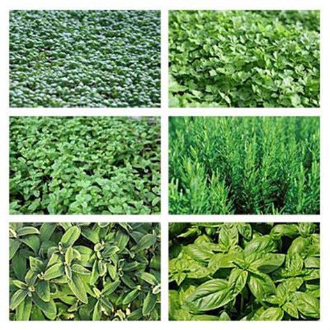 astuces de cuisine et herbes aromatiques paperblog