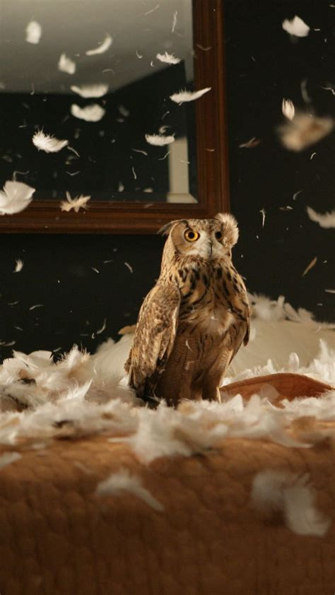wallpaper owl feathers cute animals funny animals
