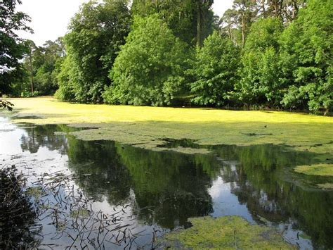 Search Results Oligotrophic Vs Eutrophic Lake   The Best