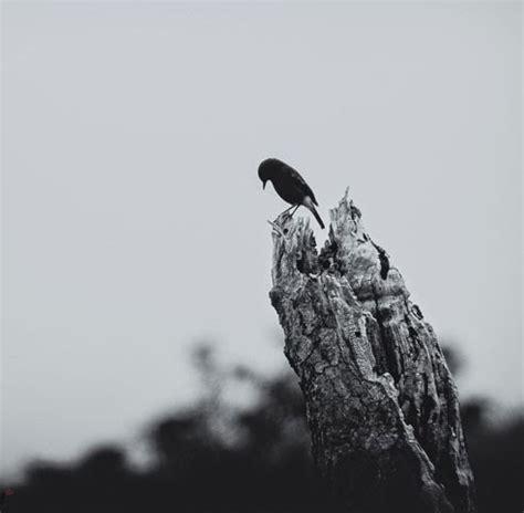 sad birds    lonely im  lonely