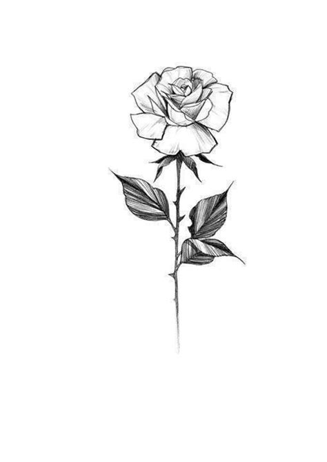 Photo | Tattoo design drawings, Rose sketch, Floral tattoo design