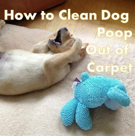 method    clean dog poop