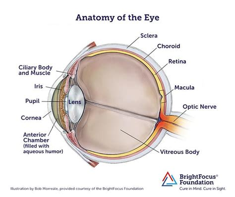 eye anatomy  structure eye cataracts eye anatomy