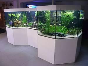Aquarium Als Raumteiler : aquarien und terrarien indiv gestalten aquariumbau ~ Michelbontemps.com Haus und Dekorationen