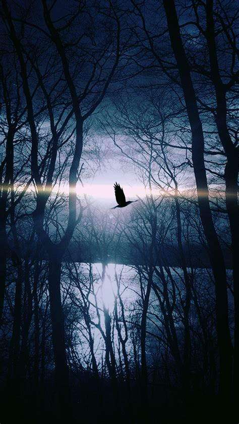 wood night dark nature bird fly lake android wallpaper