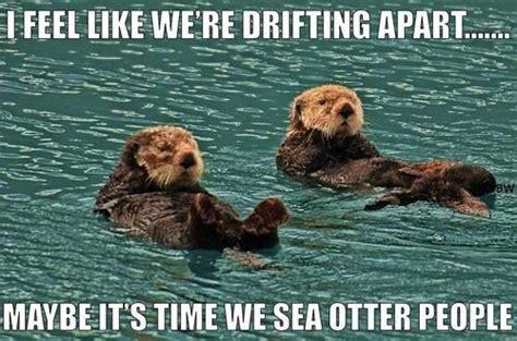 Sea Otter Meme - otter puns punpedia