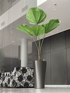Palmen Für Drinnen : 20 besten lechuza bilder auf pinterest schleiereulen becher und b ropflanzen ~ Bigdaddyawards.com Haus und Dekorationen