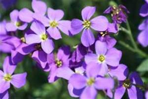 Wann Blühen Krokusse : bl tezeit des krokus wann bl ht welche sorte ~ Eleganceandgraceweddings.com Haus und Dekorationen