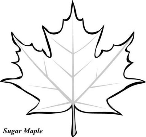 leaf cut out thanksgiving cut outs my traceables thanksgiving maple leaves and leaf template