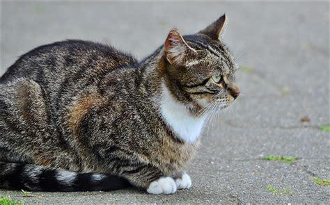 Top 100 populaire kattennamen - petplan, dé huisdierenverzekering