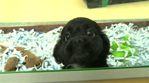 Edmonton Humane Society issues warning over new pet stores