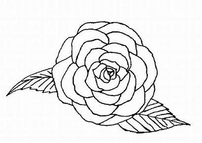 Coloring Rose Single Drawing Coloringpagebook Advertisement Getdrawings