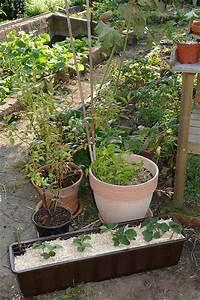 Heidelbeeren Pflanzen Balkon : vom bio garten zum bio balkon garten livona der bio blog ~ Lizthompson.info Haus und Dekorationen
